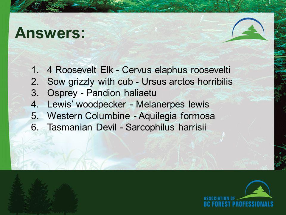 Answers: 1.4 Roosevelt Elk - Cervus elaphus roosevelti 2.Sow grizzly with cub - Ursus arctos horribilis 3.Osprey - Pandion haliaetu 4.Lewis woodpecker - Melanerpes lewis 5.Western Columbine - Aquilegia formosa 6.Tasmanian Devil - Sarcophilus harrisii