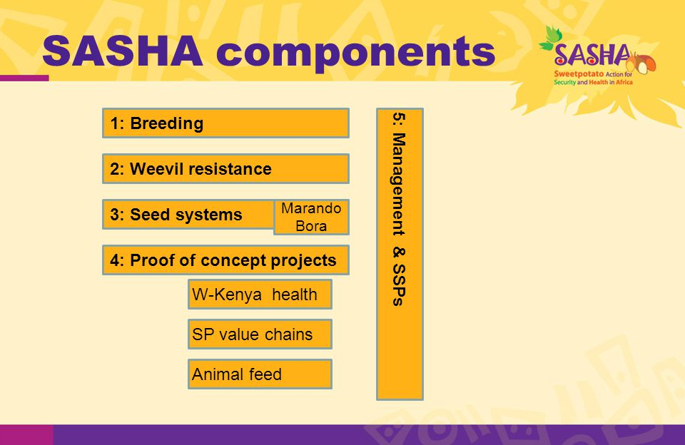 SASHA components 1: Breeding 2: Weevil resistance 3: Seed systems 4: Proof of concept projects W-Kenya health SP value chains Animal feed 5: Management & SSPs Marando Bora