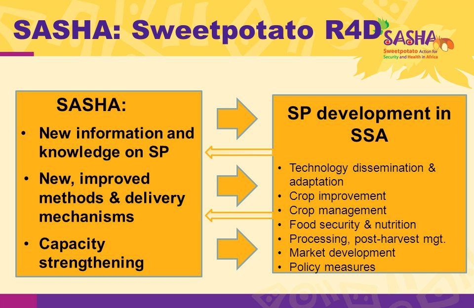 SASHA: Sweetpotato R4D New information and knowledge on SP New, improved methods & delivery mechanisms Capacity strengthening SP development in SSA Technology dissemination & adaptation Crop improvement Crop management Food security & nutrition Processing, post-harvest mgt.