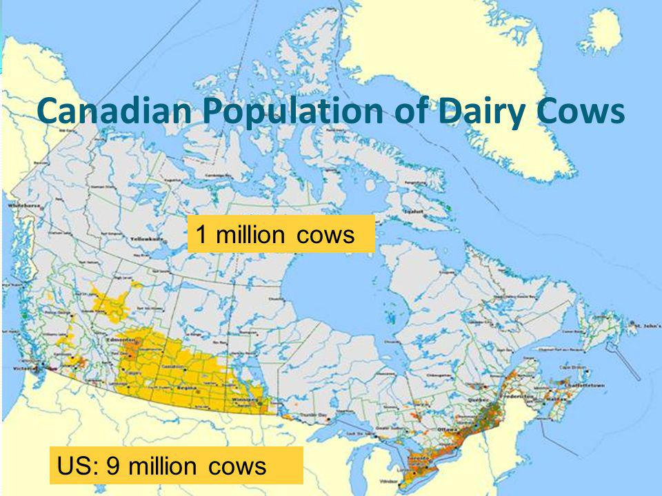 Canadian Population of Dairy Cows 3 1 million cows US: 9 million cows