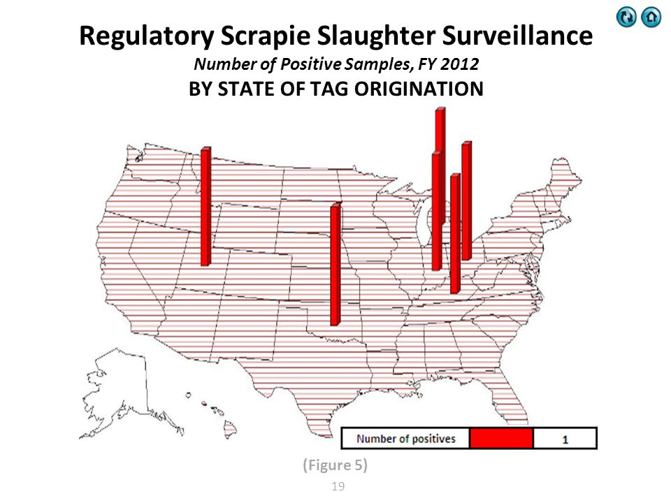 (Figure 5) Regulatory Scrapie Slaughter Surveillance Number of Positive Samples, FY 2012 BY STATE OF TAG ORIGINATION 19