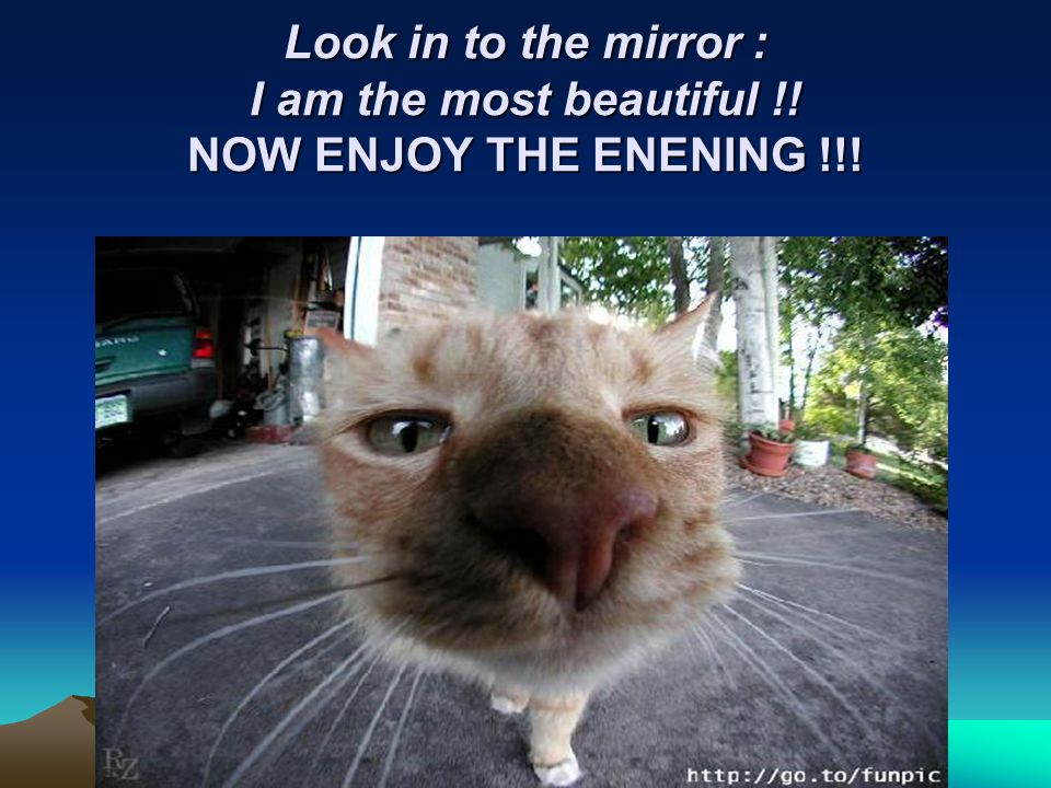 Look in to the mirror : I am the most beautiful !! NOW ENJOY THE ENENING !!!