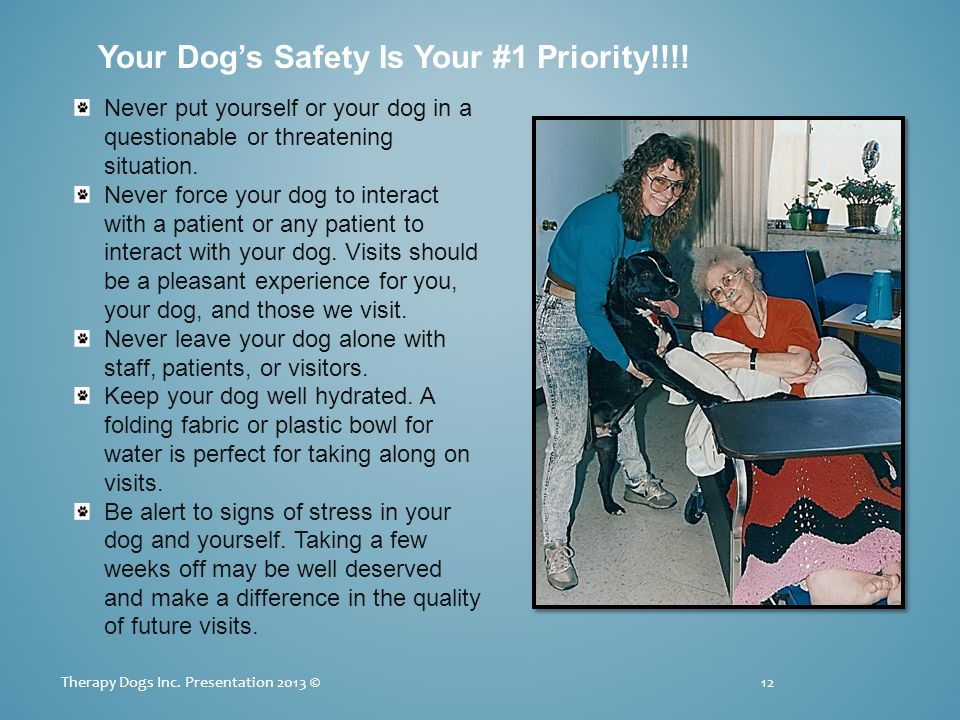 Your Dogs Safety Is Your #1 Priority!!!. 12Therapy Dogs Inc.