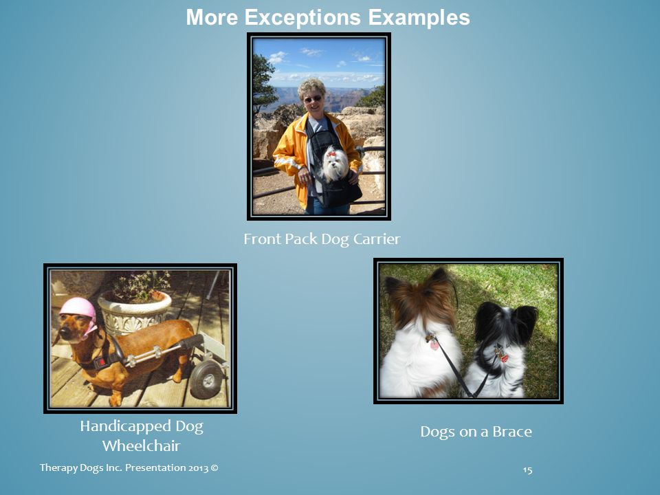 More Exceptions Examples 15 Therapy Dogs Inc.
