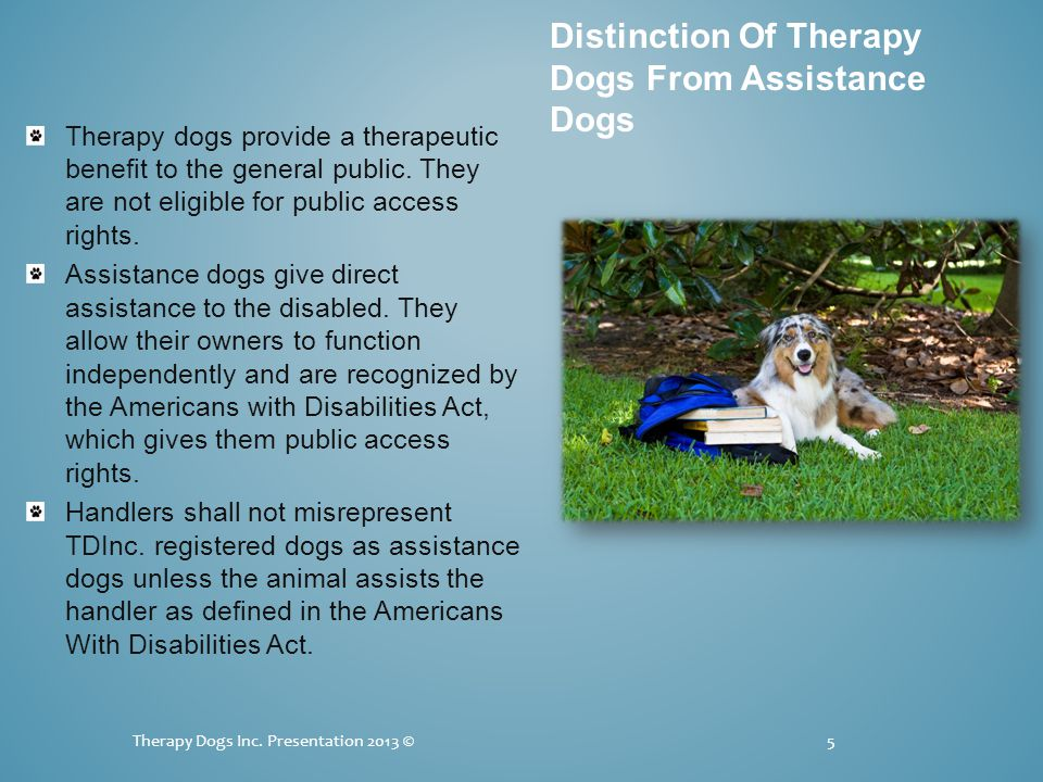 Therapy dogs provide a therapeutic benefit to the general public.