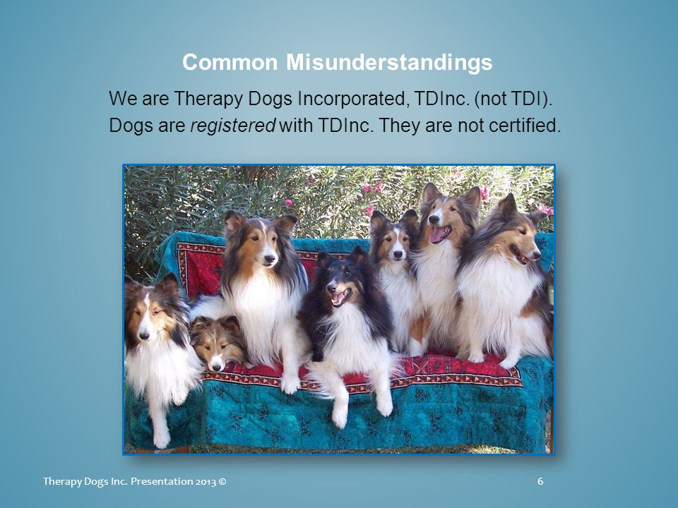 Common Misunderstandings We are Therapy Dogs Incorporated, TDInc.