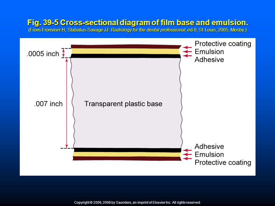 Fig. 39-5 Cross-sectional diagram of film base and emulsion. (From Frommer H, Stabalus-Savage JJ: Radiology for the dental professional, ed 8, St Loui