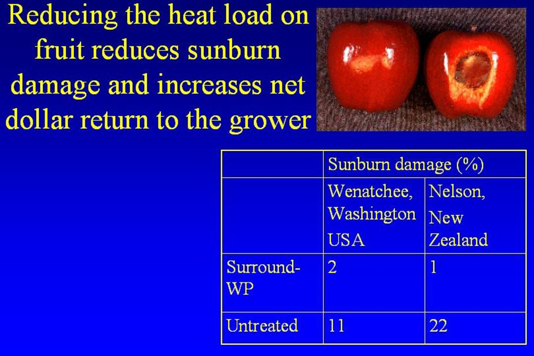 Reducing the heat load on fruit reduces sunburn damage and increases net dollar return to the grower