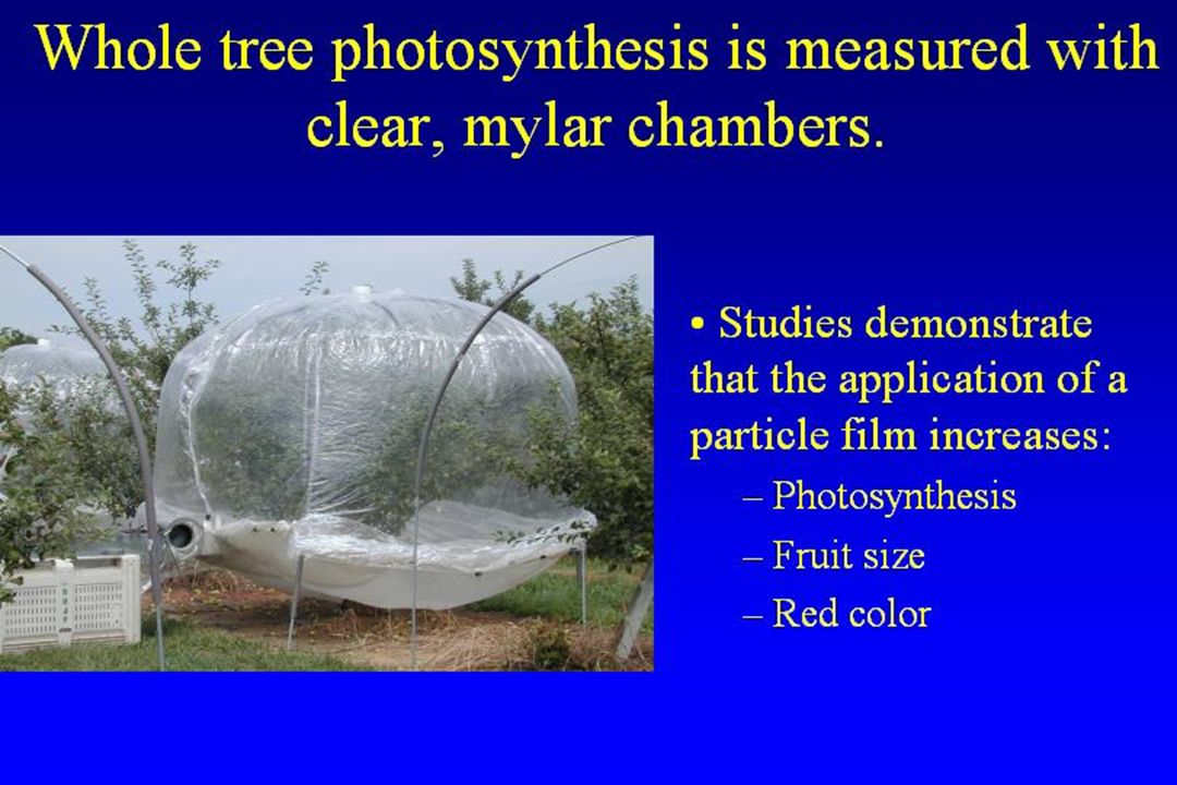 Whole tree photosynthesis is measured with clear, mylar chambers.