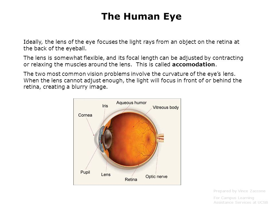 Ideally, the lens of the eye focuses the light rays from an object on the retina at the back of the eyeball. The lens is somewhat flexible, and its fo