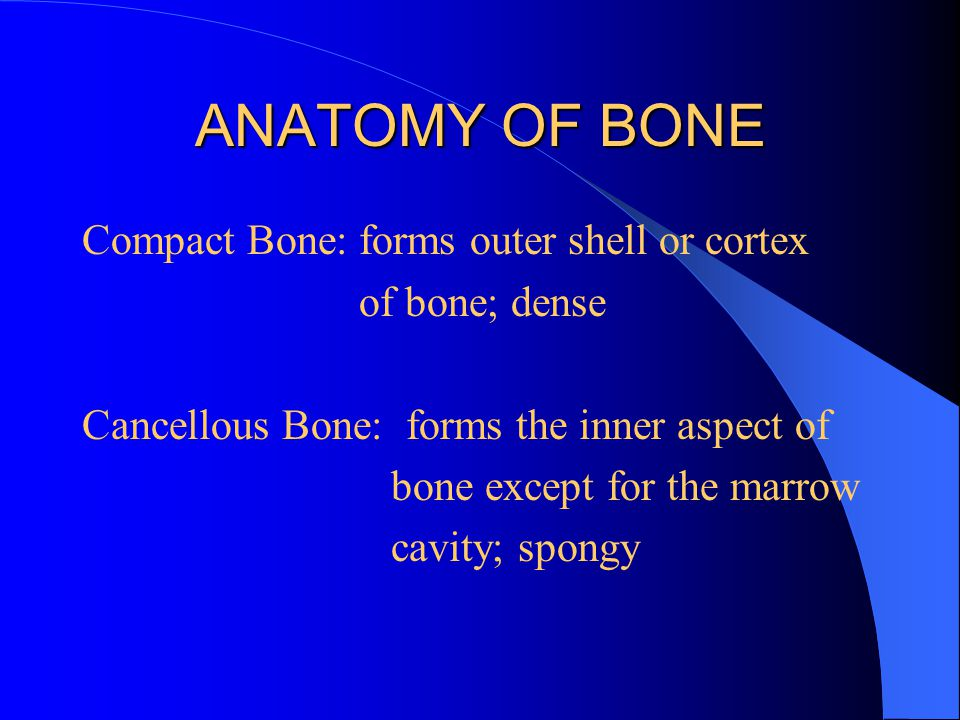 ANATOMY OF BONE Compact Bone: forms outer shell or cortex of bone; dense Cancellous Bone: forms the inner aspect of bone except for the marrow cavity;