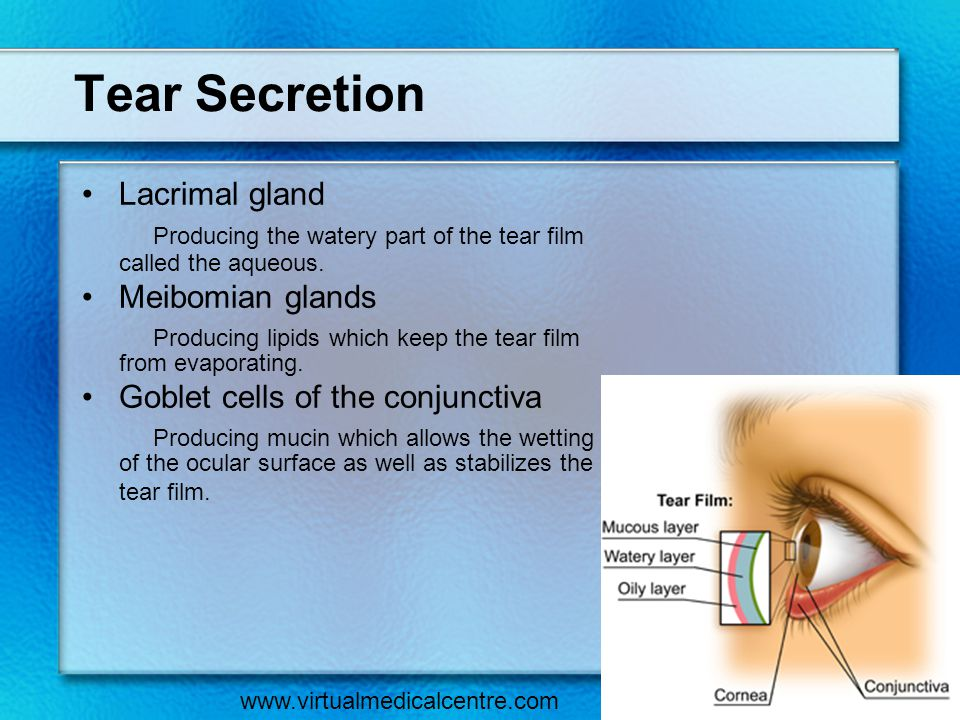 Tear Secretion Lacrimal gland Producing the watery part of the tear film called the aqueous. Meibomian glands Producing lipids which keep the tear fil