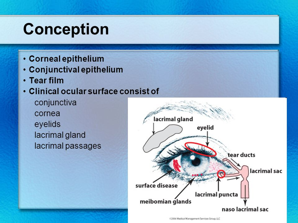 Conception Corneal epithelium Conjunctival epithelium Tear film Clinical ocular surface consist of conjunctiva cornea eyelids lacrimal gland lacrimal