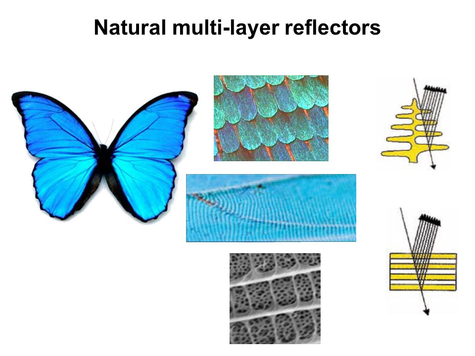 Natural multi-layer reflectors