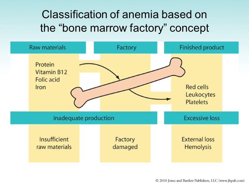 Classification of anemia based on the bone marrow factory concept