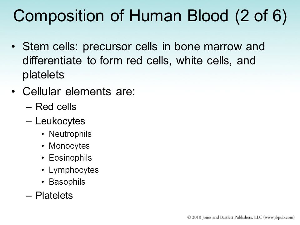 Composition of Human Blood (3 of 6) Red cells –Primarily concerned with transport of oxygen –Most numerous cells –Survive 4 months (120 days) –Erythroblast: precursor cell in bone marrow –Hemoglobin: oxygen-carrying protein formed by the developing red cell Leukocytes –Less numerous –Different types –Survival from several hours to several days, except for lymphocytes