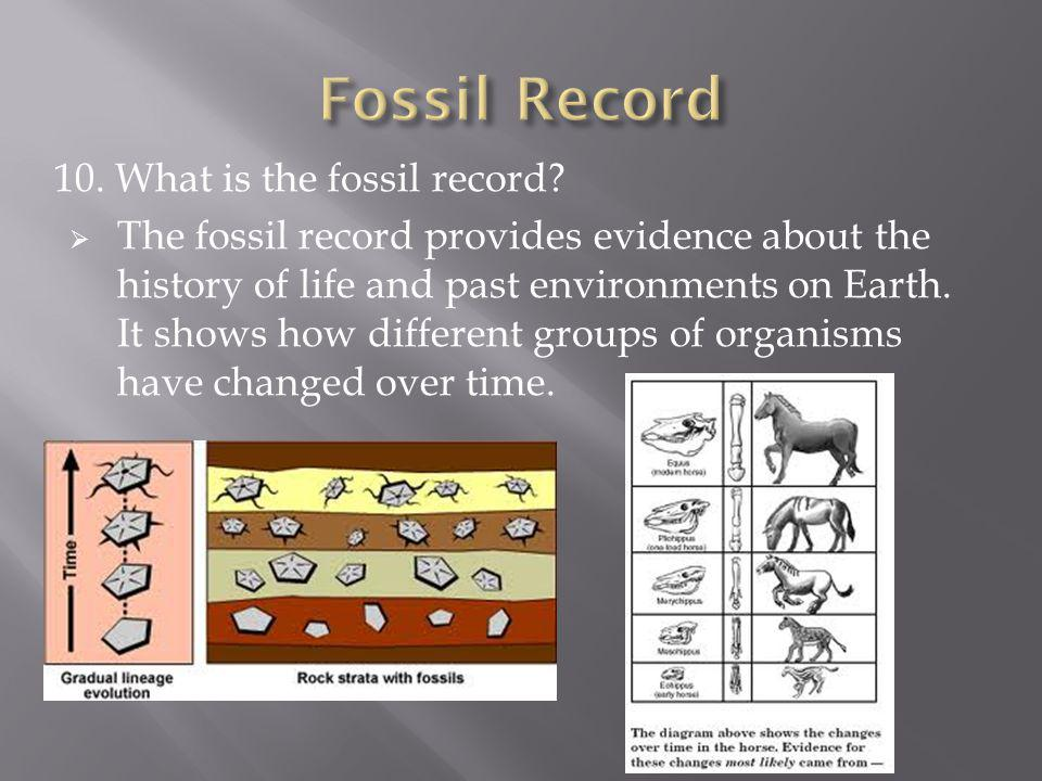 10. What is the fossil record? The fossil record provides evidence about the history of life and past environments on Earth. It shows how different gr