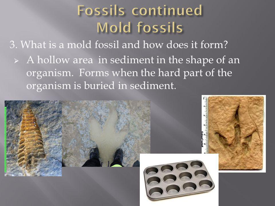 3. What is a mold fossil and how does it form? A hollow area in sediment in the shape of an organism. Forms when the hard part of the organism is buri
