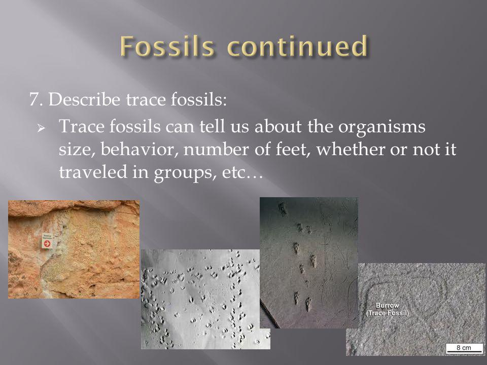 7. Describe trace fossils: Trace fossils can tell us about the organisms size, behavior, number of feet, whether or not it traveled in groups, etc…