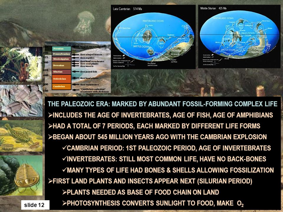THE PALEOZOIC ERA: MARKED BY ABUNDANT FOSSIL-FORMING COMPLEX LIFE INCLUDES THE AGE OF INVERTEBRATES, AGE OF FISH, AGE OF AMPHIBIANS HAD A TOTAL OF 7 P