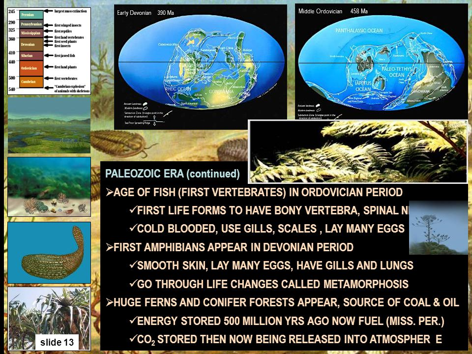 slide 13 PALEOZOIC ERA (continued) AGE OF FISH (FIRST VERTEBRATES) IN ORDOVICIAN PERIOD FIRST LIFE FORMS TO HAVE BONY VERTEBRA, SPINAL NERVE COLD BLOO
