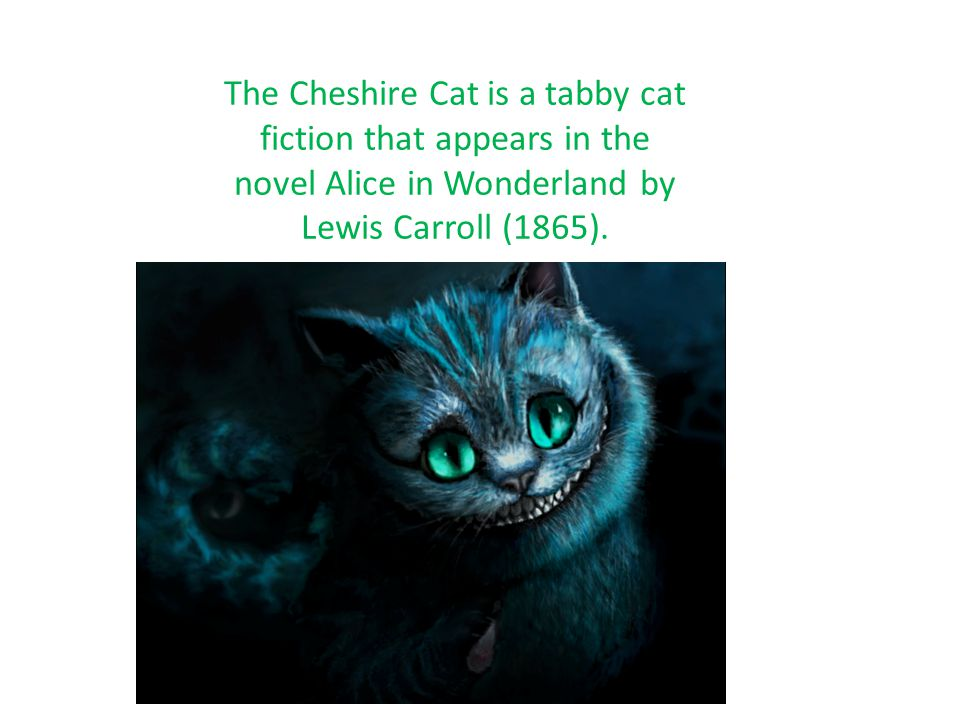 The Cheshire Cat is a tabby cat fiction that appears in the novel Alice in Wonderland by Lewis Carroll (1865).