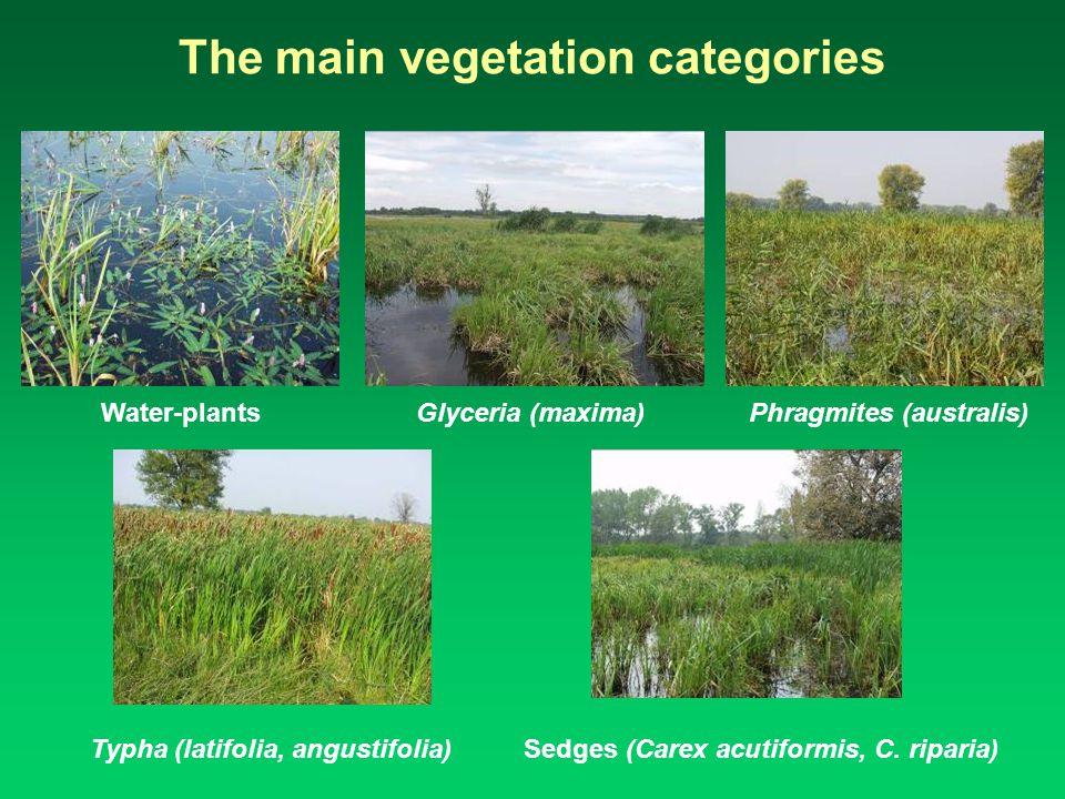 The main vegetation categories Water-plants Glyceria (maxima) Phragmites (australis) Typha (latifolia, angustifolia) Sedges (Carex acutiformis, C.