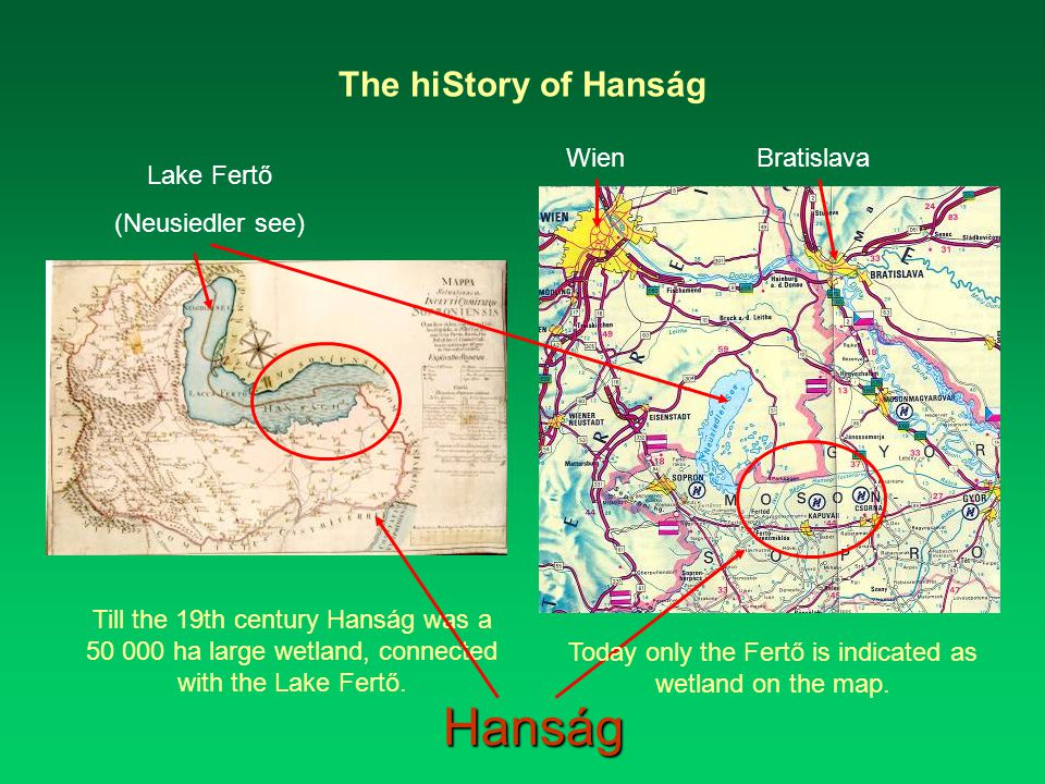 The hiStory of Hanság Till the 19th century Hanság was a 50 000 ha large wetland, connected with the Lake Fertő.