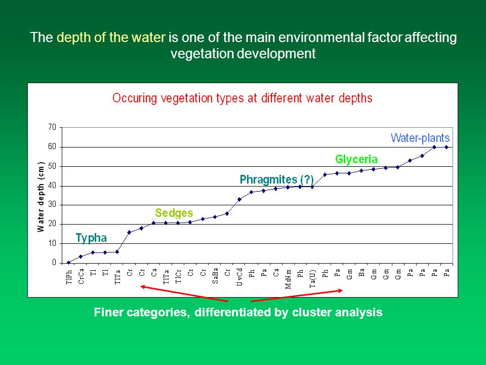 The depth of the water is one of the main environmental factor affecting vegetation development Finer categories, differentiated by cluster analysis