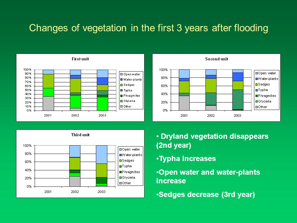 Changes of vegetation in the first 3 years after flooding Dryland vegetation disappears (2nd year) Typha increases Open water and water-plants increase Sedges decrease (3rd year)