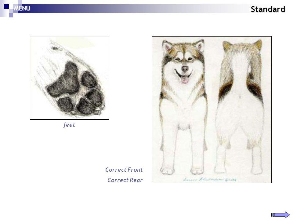 Standard feet Correct Front Correct Rear MENU