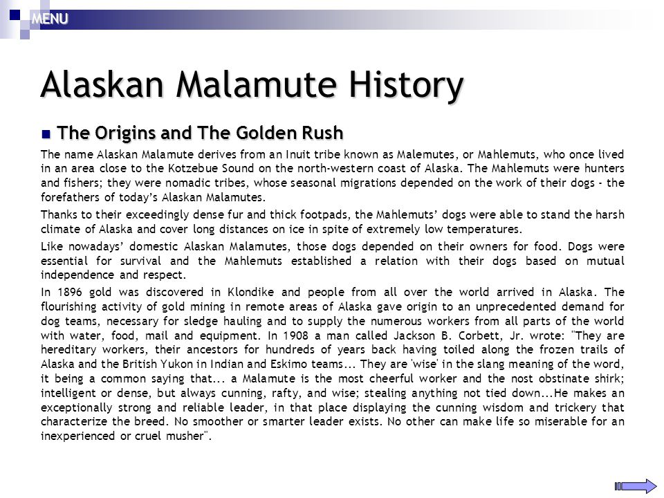 Alaskan Malamute History The Origins and The Golden Rush The Origins and The Golden Rush The name Alaskan Malamute derives from an Inuit tribe known a