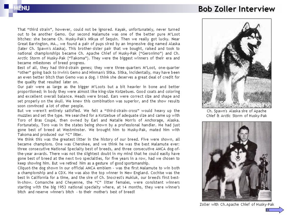 Bob Zoller Interview That third strain, however, could not be ignored. Kayak, unfortunately, never turned out to be another Gemo. Our second Malamute
