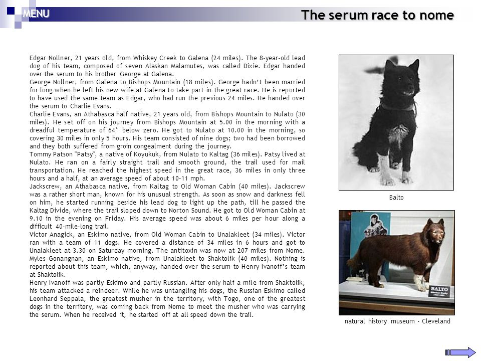 The serum race to nome Edgar Nollner, 21 years old, from Whiskey Creek to Galena (24 miles). The 8-year-old lead dog of his team, composed of seven Al
