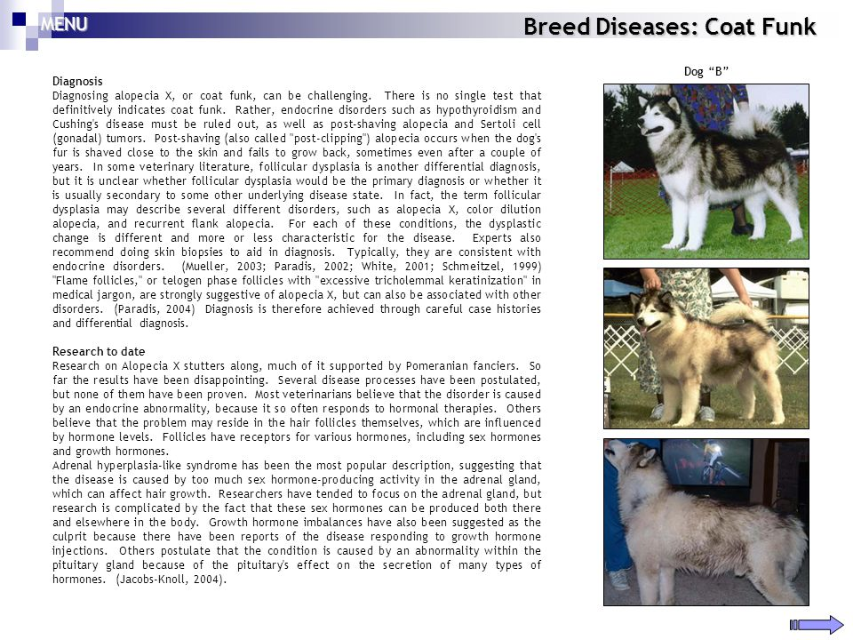 Breed Diseases: Coat Funk Diagnosis Diagnosing alopecia X, or coat funk, can be challenging. There is no single test that definitively indicates coat
