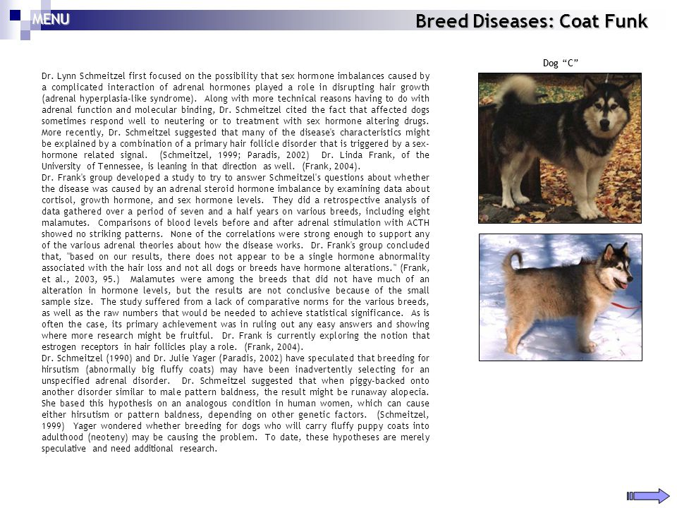 Breed Diseases: Coat Funk Dr. Lynn Schmeitzel first focused on the possibility that sex hormone imbalances caused by a complicated interaction of adre