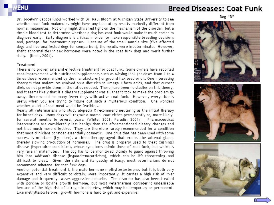 Breed Diseases: Coat Funk Dr. Jocelynn Jacobs Knoll worked with Dr. Paul Bloom at Michigan State University to see whether coat funk malamutes might h