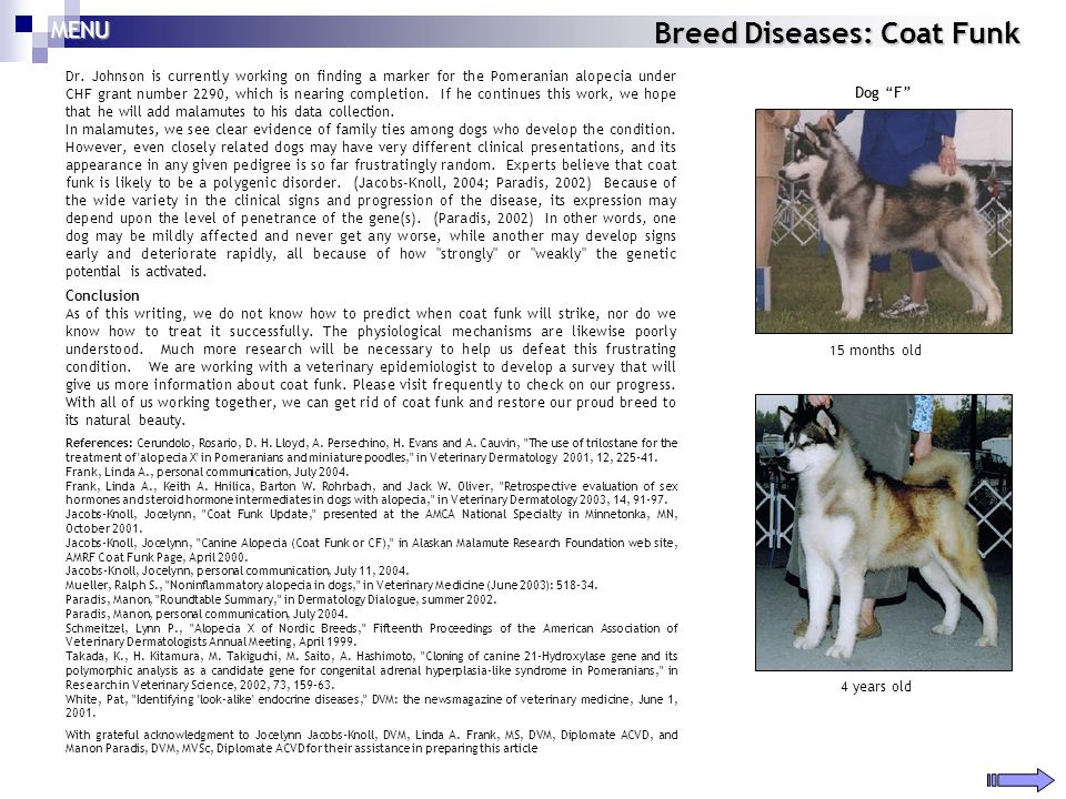 Breed Diseases: Coat Funk Dr. Johnson is currently working on finding a marker for the Pomeranian alopecia under CHF grant number 2290, which is neari