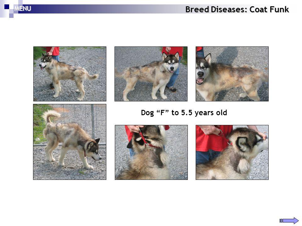 Breed Diseases: Coat Funk MENU Dog F to 5.5 years old