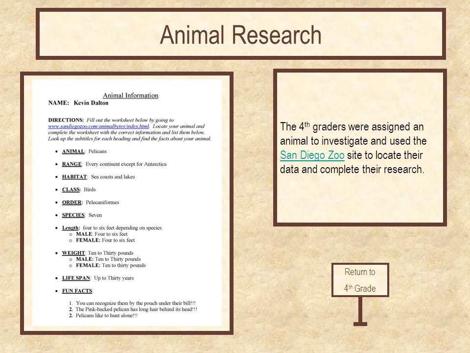 Return to 4 th Grade Animal Research The 4 th graders were assigned an animal to investigate and used the San Diego ZooSan Diego Zoo site to locate th