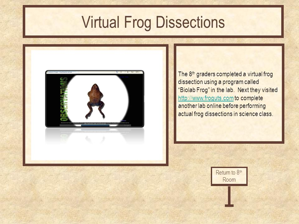 The 8 th graders completed a virtual frog dissection using a program called Biolab Frog in the lab. Next they visited http://www.froguts.comhttp://www