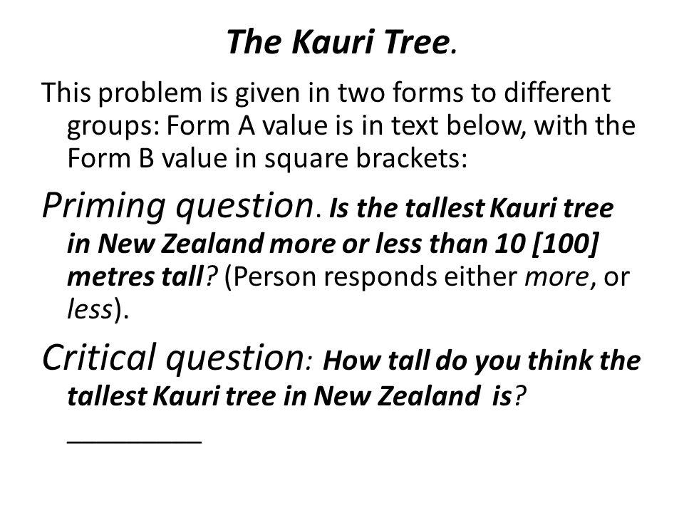 The Kauri Tree.