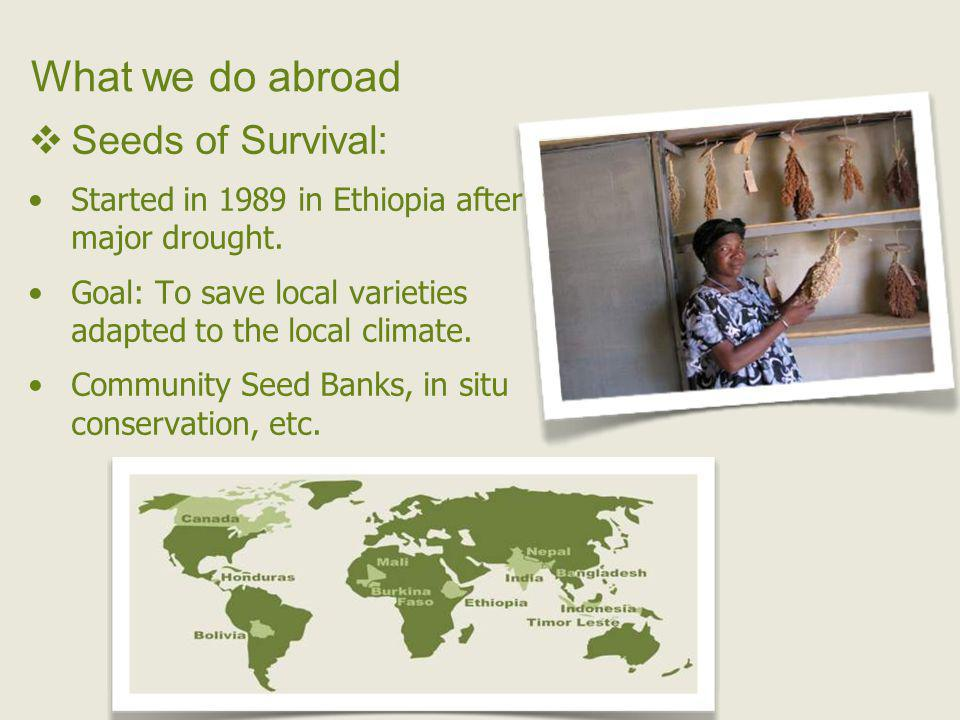 What we do abroad Seeds of Survival: Started in 1989 in Ethiopia after a major drought.