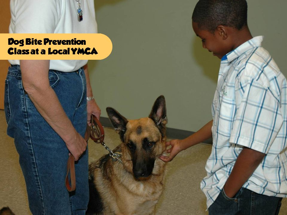 Dog Bite Prevention Class at a Local YMCA