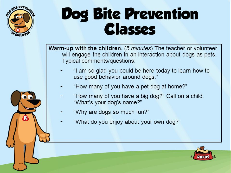 Dog Bite Prevention Classes (Continued) -Are most dogs friendly.