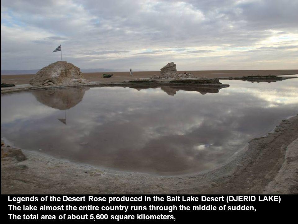 Desert Oasis CHEBIKA