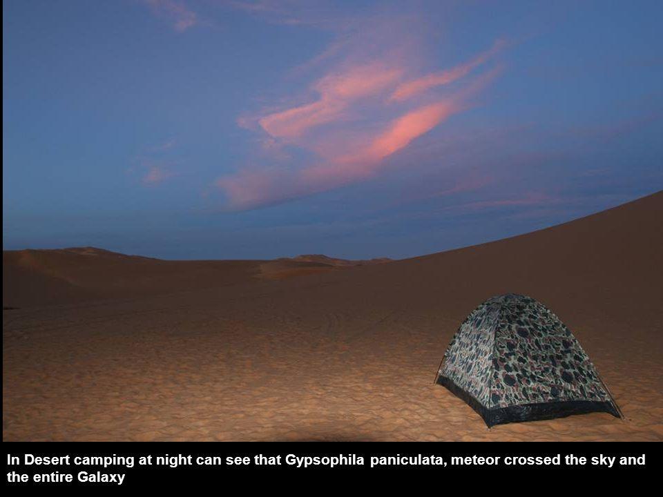 Desert Fox Desert Scorpion