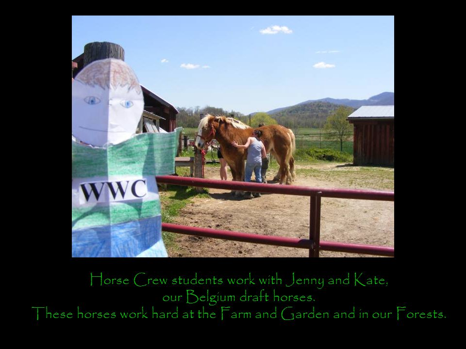 Horse Crew students work with Jenny and Kate, our Belgium draft horses.