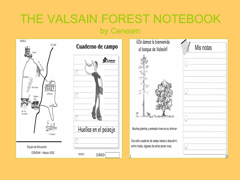Feeling the forest: using your senses Describing trees and bushes Talking about landscape
