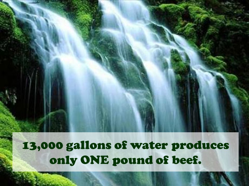 13,000 gallons of water produces only ONE pound of beef.
